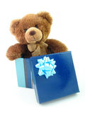 Teddy bear in gift box Stock Images