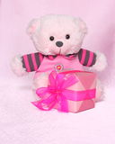 Teddy Bear with gift - Valentines Day Stock Photos. Teddy Bear with gift - Valentines Day or Mothers day card : cute Teddybear with Box on Pink Background stock images