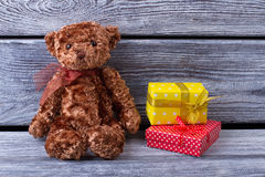 Teddy bear with gifts. Stock Photography