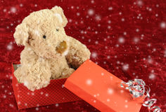 Teddy bear in giftt box on red Royalty Free Stock Photo
