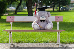 Teddy bear graduate bachelor's degree. Stock Photos
