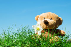 Teddy bear on grass stock images