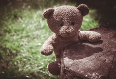 Teddy bear on the grass Royalty Free Stock Images