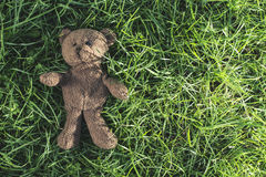 Teddy bear on the grass Stock Images