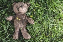 Teddy bear on the grass Stock Photos