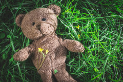 Teddy bear on the grass Stock Photography