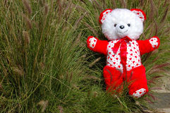 Teddy bear in green grass Stock Photos