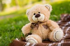 Teddy bear on the green grass. Bear soft toy on the grass Stock Photos