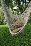 Teddy bear in hammoch Royalty Free Stock Image