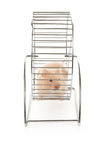 Teddy Bear Hamster Royalty Free Stock Photos