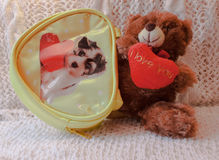 Teddy bear with handbag and heart. Valentine`s Day postcard. Teddy bear with a heart. Yellow handbag with a dog. Postcard for Valentine`s Day Royalty Free Stock Images
