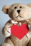 Teddy bear with a heart. Picture of a teddy bear keeping the red heart royalty free stock photo