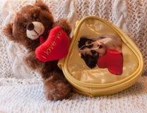 Teddy bear with a heart in yellow handbag. Postcard for Valentin. Teddy bear with a heart. Yellow handbag with a dog. Postcard for Valentine`s Day Stock Photo