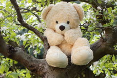 Teddy bear hiding in apple tree Royalty Free Stock Photography