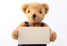 Teddy bear holding a blank card Royalty Free Stock Photos