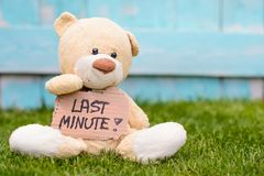 Teddy bear holding cardboard with information Last Minute. Little old teddy bear sitting on the grass in the garden and holding a piece of cardboard with the Royalty Free Stock Photo