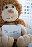 Teddy bear holds an announcement card for baby boy, space for text. New arrival in the family Royalty Free Stock Image
