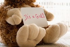 Teddy bear holds an announncement card for baby girl, space for text. New arrival in the family royalty free stock photos