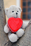 Teddy bear holds a red heart Stock Image