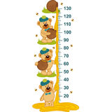 Teddy bear and honey height measure Stock Photography
