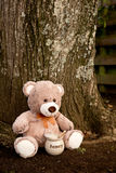 Teddy Bear with Honey Pot Stock Images