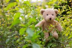 Teddy Bear im Blatt Stockfotografie