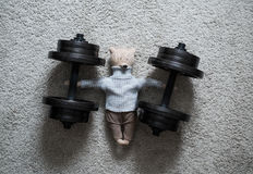 Teddy Bear im Gewichts-Training Stockbilder