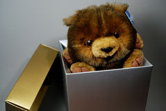 Teddy Bear Inside a Box Stock Images