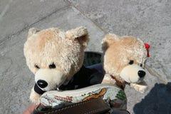 Teddy Bear ist in der Tasche stockfoto