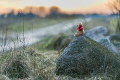 Teddy bear in landscape. Small teddy bear sitting on stone in a rural landscape at sunset Royalty Free Stock Photo