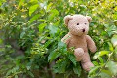 Teddy Bear in the leaf Royalty Free Stock Photos