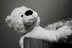 Teddy Bear leksak Royaltyfria Bilder