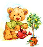 Teddy bear and a lemon tree. watercolor Stock Image