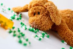 Teddy bear lie with big pile of tablets. Fell out from container jar closeup. Paediatrics terminal sickness like cancer of hiv concept Stock Image