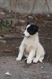 Teddy bear like stray puppy Stock Images