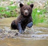 Teddy-bear Royalty Free Stock Photo