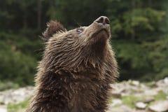 Teddy Bear Looks på himmel Royaltyfria Foton