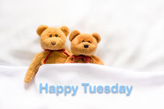 Teddy Bear lying in the white bed with message; Happy Tuesday; Stock Image