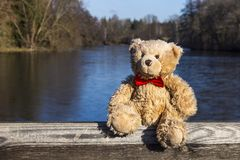 Teddy bear near partially frozen pond in winter. stock photography