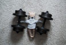 Teddy Bear nell'addestramento del peso Immagini Stock