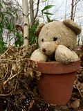 Teddy bear outside in pot Stock Images