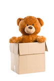 Teddy bear in paper box Stock Images