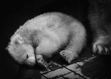 Teddy-bear peacefully sleeping royalty free stock photo