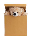 Teddy bear peeking out of the box Stock Photography