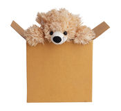 Teddy bear peeking out of a box Royalty Free Stock Photo