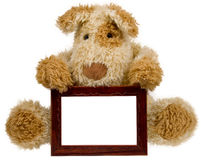 Teddy bear with photo frame Stock Photography