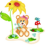 Teddy bear picking flowers Stock Photography