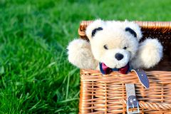 Teddy bear in a picnic basket. On grass Stock Photo