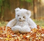 A teddy bear in a pile of leaves Stock Images