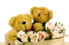 Teddy Bear and Pink Roses in Pine Wood Box on White Backgrou Stock Image